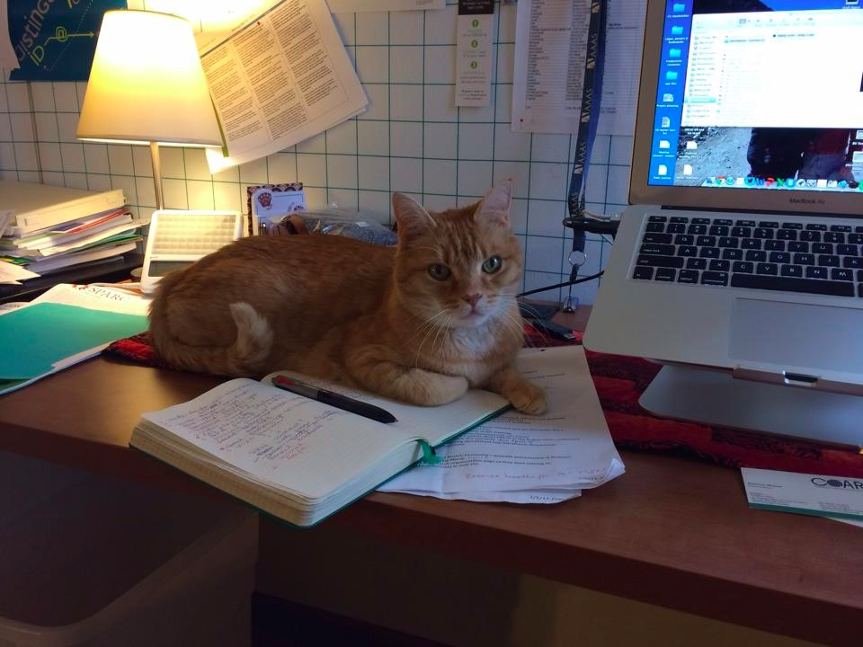 Orange cat on a desk